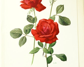 Red Rose print- 1962 Vintage Baccara rose poster print- Red botanical print- Red floral print- French vintage- Gifts for girlfriend