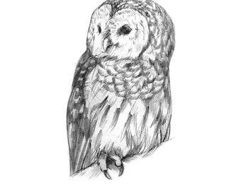 how to draw an owl barred owl wire drawing sculpture 6800