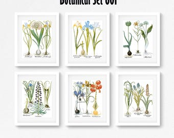 Botanical Print Set of 6, Botanical Wall Art, Floral Print Set, Vintage Botanical Prints, Antique Floral Art, Botanical Illustrations