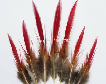 Lady Amherst Red Tipped Feathers