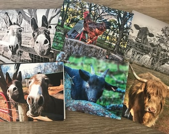 Farm Animal Note Cards - Set of 6
