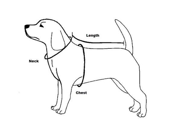 Military Harness Labrador Dog