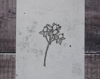 Botanical monotype print: Hypericum