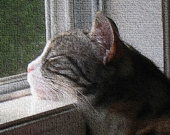 Snooze In the Sunshine - Sleeping Cat - Limited Edition of Ten