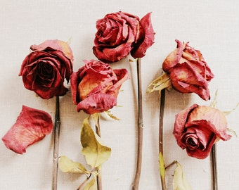 Still Life Photography - Dried Red Roses Print - Gift for Her - Lovely Photography - 8x12