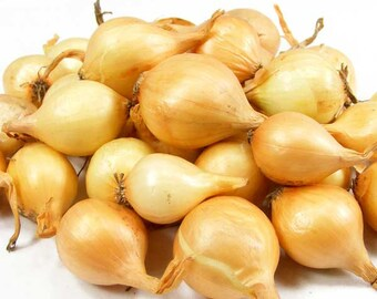 Yellow Onion Sets Organic | Stuttgarter Onion Bulbs Spring Shipping 50-60 Bulbs  8 oz. - Spring Shipping