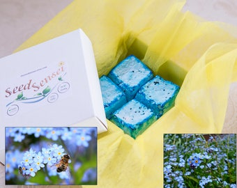 Forget me not seed bomb pack, square blue seed bombs, handmade myosotis seed bombs, eco friendly gift, plantable bee friendly flowers