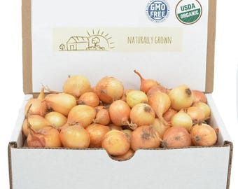 Yellow Onion Sets Organic | Stuttgarter Onion Bulbs 1 Pound - Non-GMO Spring Shipping