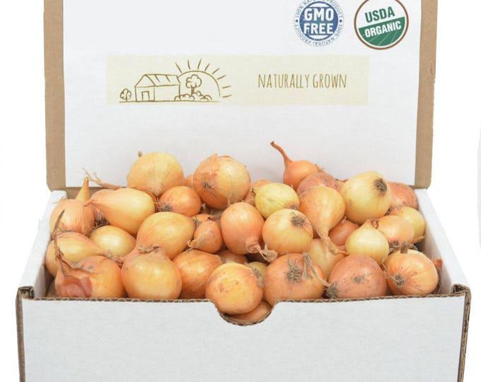 Yellow Onion Sets Organic | Stuttgarter Onion Bulbs 1 Pound - Non-GMO Spring Shipping
