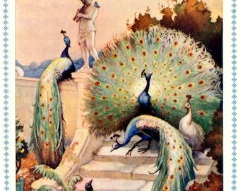 Splendiferous PEACOCKS! Vintage Fairy Tale Illustration. Digital Download. Vintage Digital Peacock Print.