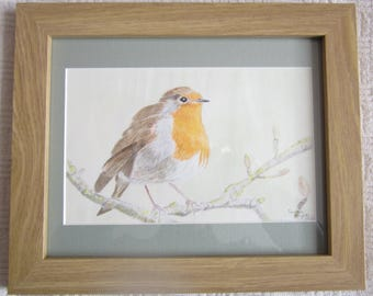 Robin Red Breast - A framed original watercolour by Gwen Blyth