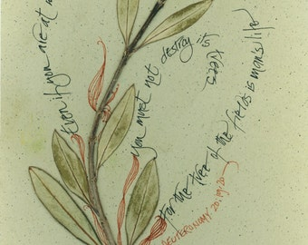 """Blank note card with olive leaves and calligraphy:  """"The Tree of Life"""""""