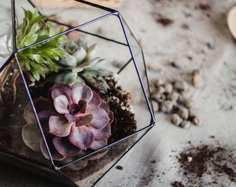 Geometric Terrarium, Gardening Gift, Stained Glass Moss Bowl, Wedding Centerpiece, Succulent Planter, Copper Home Decor, Father's Day Gift