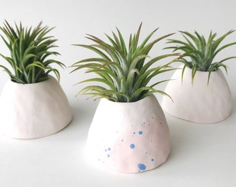 One Air Plant and Ceramic Air Plant Holder // Handmade Air Planter // Tillandsia