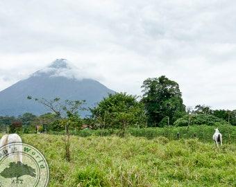 Landscape Photography   Arenal Volcano Horses   Digital Download