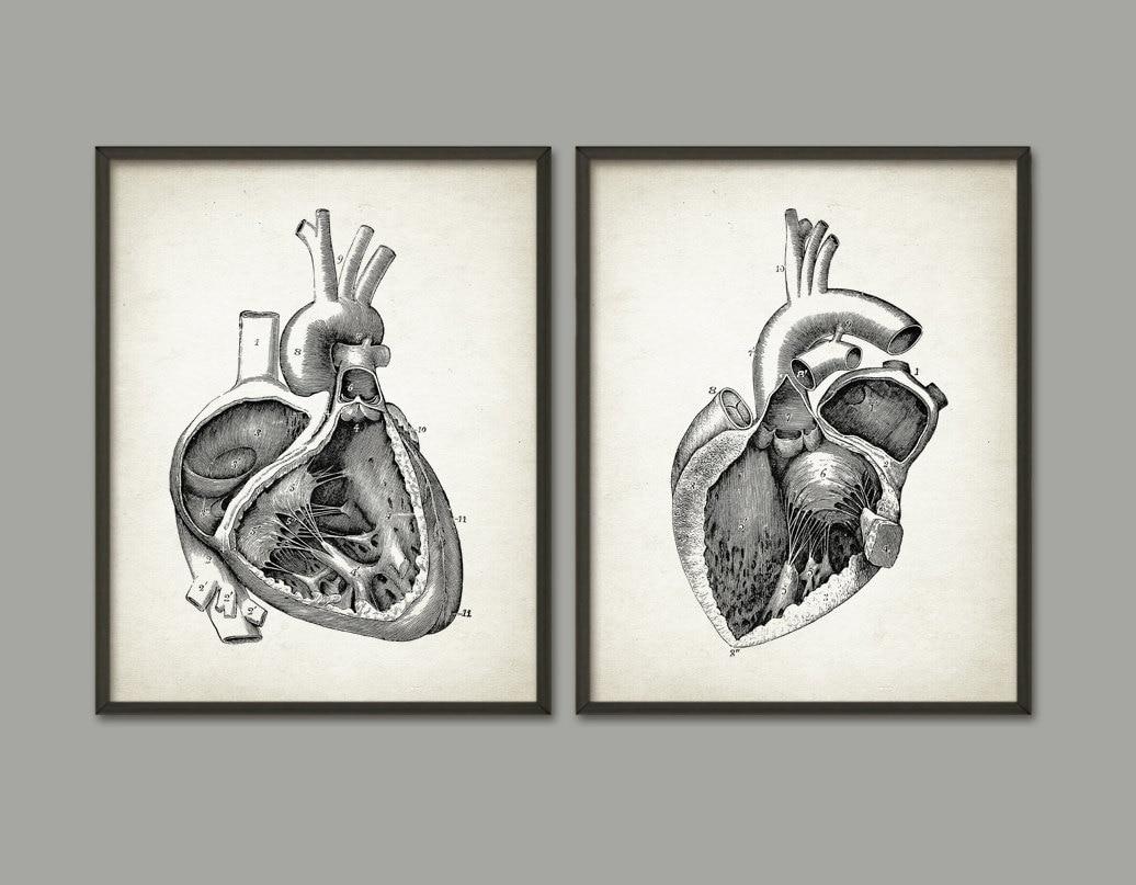 Herz-Anatomie Print-Set 2 menschliches Herz linken und