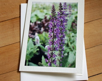 Flowers Greeting Card, Blank Greeting Card, Note Card, Any Occasion, Birthday Card, Envelope, Photography, Photograph, Stationary, Purple