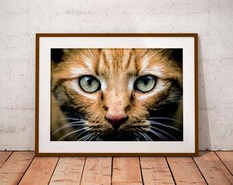 Printable Cat Art Poster, Cat Decorative Art, Red Cat Wall Art Print, Cat Poster Art, Cat Art Decor, Cat Wall Art Decor