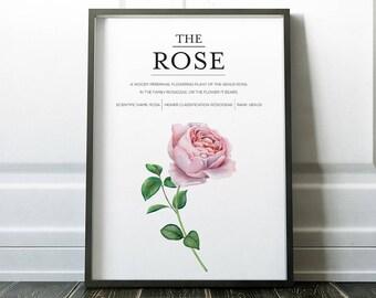 Rose Print, Flower Print, Rose Art, Flower Art, Minimalist Print, Wall Art Prints, Minimalist Art, Wall Art, Art Prints, Modern Art, Prints