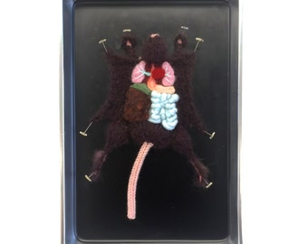 Brown Knitted Lab Rat in an actual dissection tray