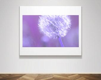 Photograph - Blooming white Dandelion on Purple violet Summer Child Baby Nursery Home Decor Fine Art Photography Print Wall Art Home Decor