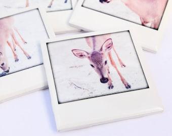 Deer Coasters - Florida Key Deer - Collectible Ceramic Drink Coasters, Set of 4