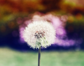 Make A Wish, Dandelion Print, Nature Photography, Nursery Art, Flower Photography