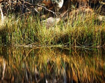 River landscape, photography, photo print, nature photo, reflections print, water print, river photography, reeds photo, reflective prints