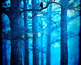 Fairytale Photo - Enchanted Forest Photography - Trees, Blackbird, Woods, Blue, Nature