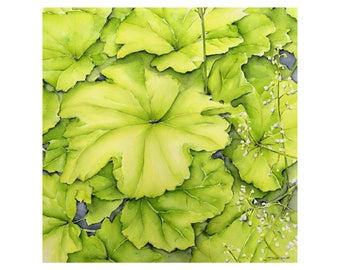 Heuchera green - fine art 40 x 40 cm, numbered and signed. Made from my watercolor
