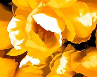 "Renew - 8x10"" Tulip photograph/digital print"