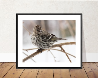 Spotted Sparrow | Bird Photography Color Print | 11x14, 8x10 or 4x6 (Custom Sizes Available Upon Request)