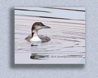 Common Loon, Gavia immer, Bird, Water Bird, Bird Art, Birding, Print