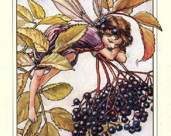 PROMOLISTING 0.99!  The Elderberry Fairy Cross Stitch Pattern Counted Cross Stitch Chart, Pdf Format, Instant Download /165220