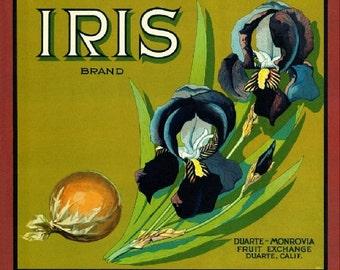 Duarte- Iris Orange Citrus Fruit Crate Box Label Art Print
