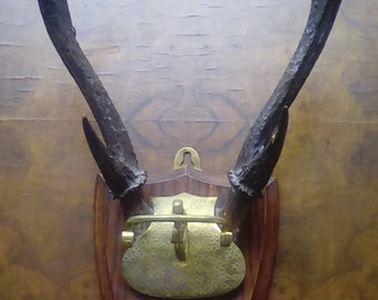 Vintage Scottish Stag Hooks on Shield Mid Century Hunting Trophy Antlers