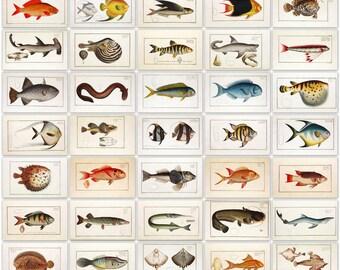 Bloch's Fish Ichtyologie Complete 6 volumes 432 color plates  High Resolution Instant digital download