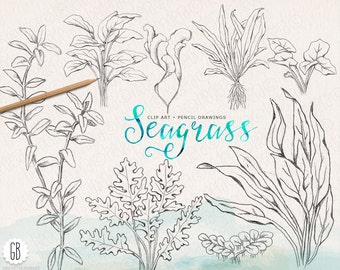 Seaweeds, sea grass, handdrawn, vintage, grasses pencil drawing, beach wedding, sea life, clip art, coral reef, stationery, instant download