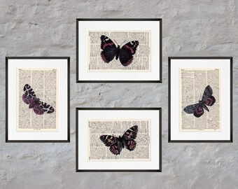 Prints - set of 4 - BUTTERFLIES No.. 2 - Antiquarian Book page