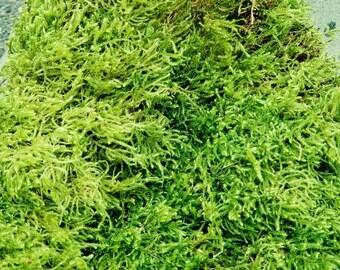 Moss Dry Sheet Moss or Dry Shag Moss, Beautiful Green Moss.