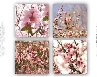 Pink Spring Blossoms Set Peach Blossoms Cherry Blossoms Flower Blooms Dreamy Cottage Chic Blossoms Photo Set