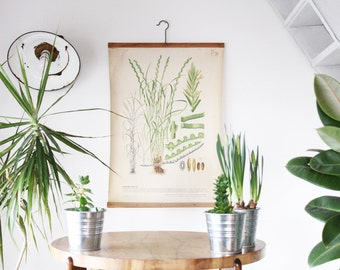 Grass School Chart, Pull Down Botanical Poster, Original Vintage Poster, Authentic, Made in Czechoslovakia, Educational Print, Home Decor
