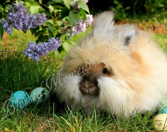 Meet Duncan, the English Angora Rabbit Photographic Note Card Pack