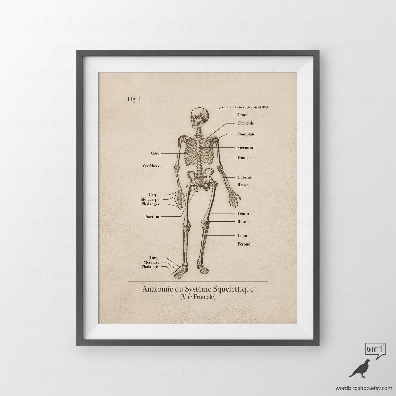 Anatomische Wand Kunst Skelett Poster Skelett Wand Kunst