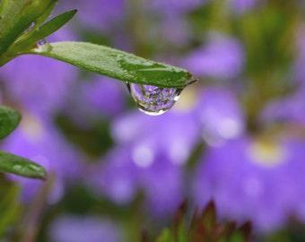 Purple wall art, water drop picture macro photography, leaf art print, bathroom artwork, dew drop, floral nature photograph botanical print