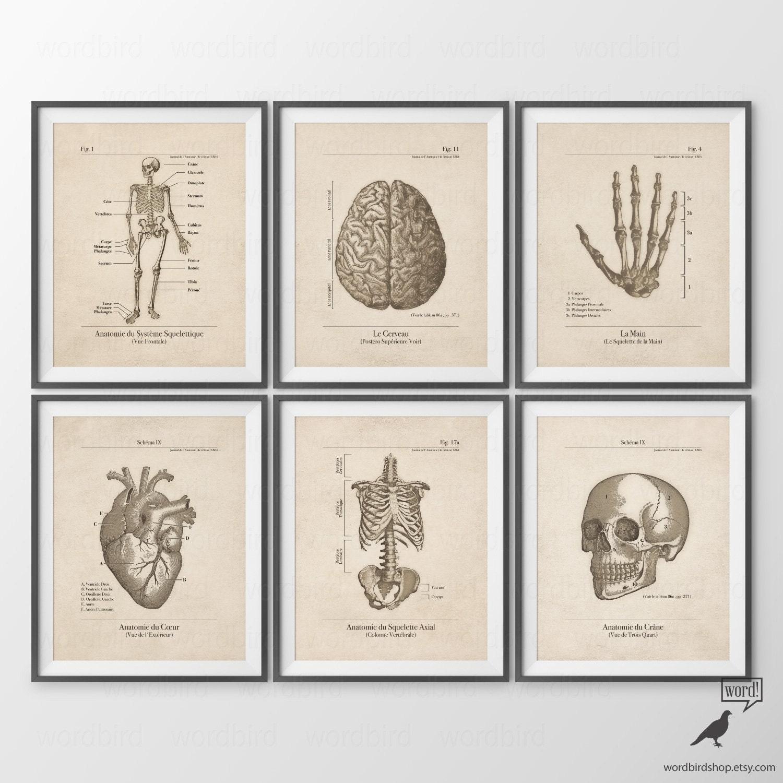Human Anatomy Posters Set of 6 Human Anatomy Prints Vintage