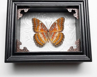 """REAL Cethosia Biblis """"red lacewing"""" butterfly"""