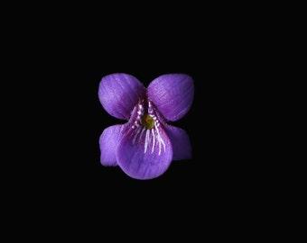 Violet Pin Brooch