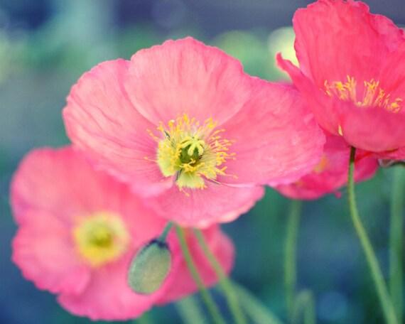 Poppies photograph botanical print poppy print flower mightylinksfo
