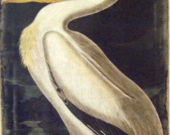 Audubon Pelican Classic Rich Print to Canvas Ready to Hang Museum Quality Quality One of A Kind Process